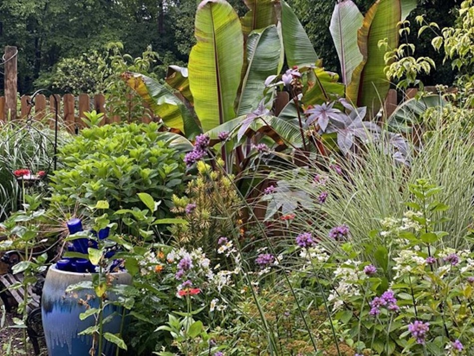 Les plantes tropicales donnant une allure exotique à un jardin.