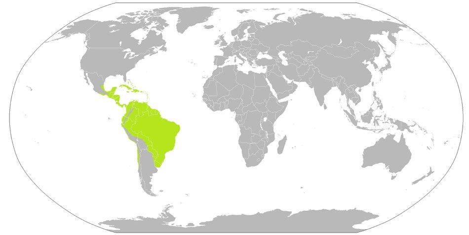 Carte montrant la répartition des dieffenbachias à l'état sauvage.