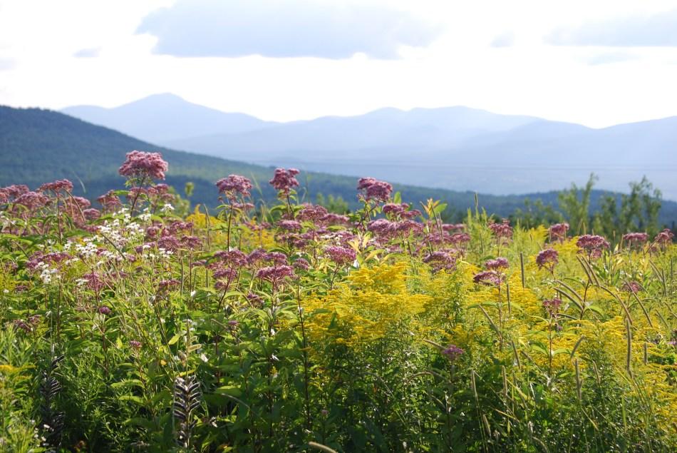 Fleurs indigènes dans un pré fleuri.