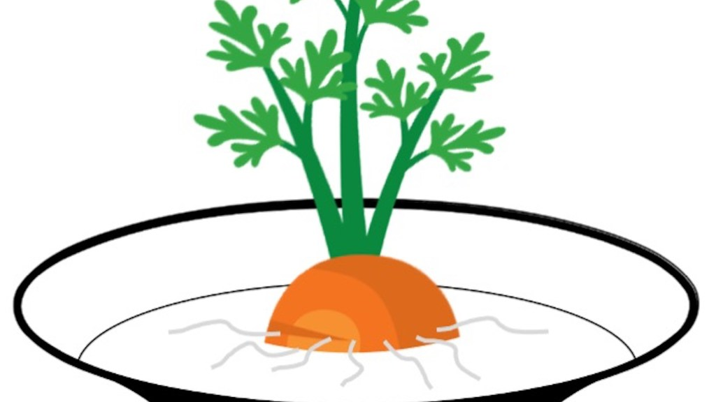 Tête de carotte enracinée dans un bol d'eau.