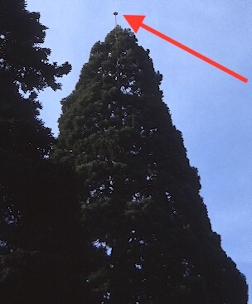 Paratonnerre dans un arbre.