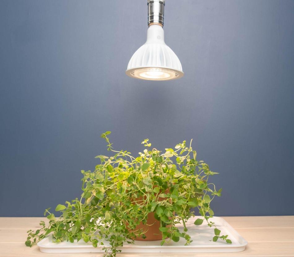 Ampoule LED de croissance GE 32W
