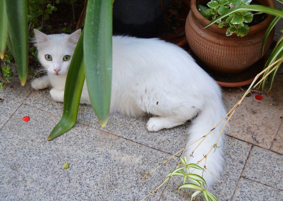 Chat blanc se cachant parmi des plantes.