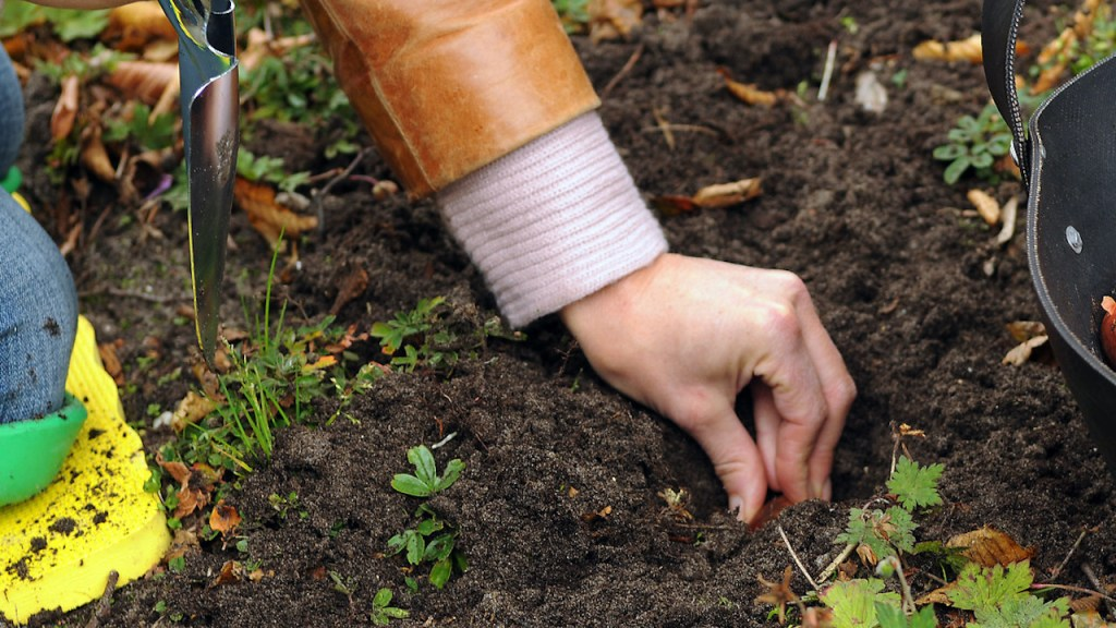 Main qui plante des bulbes.