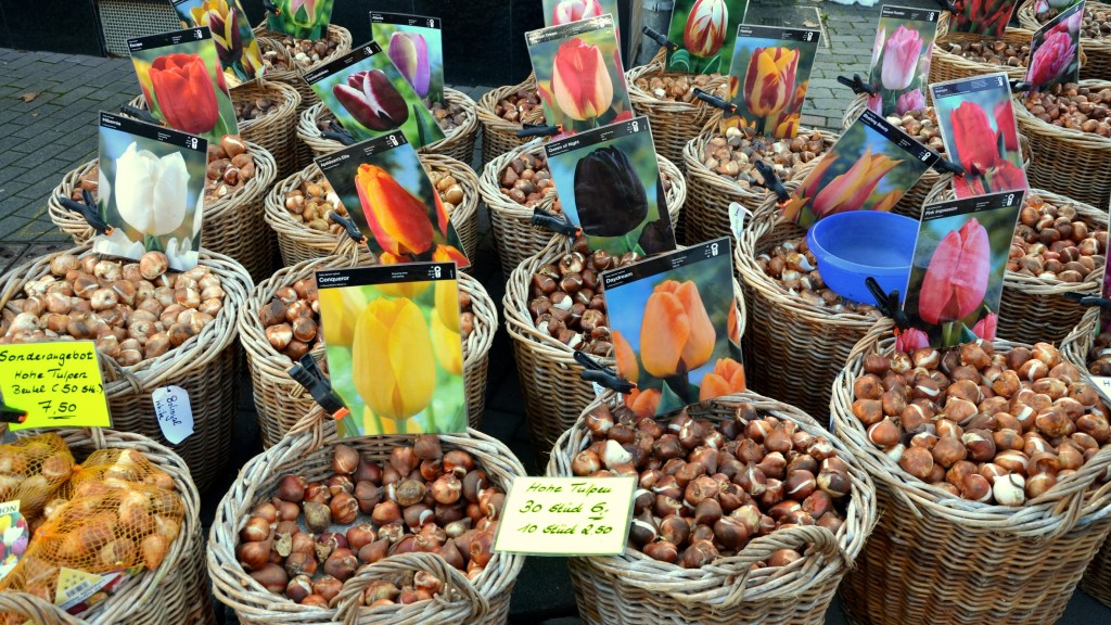 Boisseaux de bulbes de tulipe
