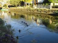 The Birds of the Venice Canals
