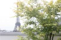 Vue sur la Tour Eiffel adoucie par les feuilles légères de l'érable 'Higasayama'