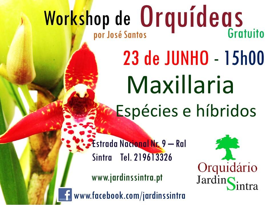 Workshop gratuito de Orquídeas