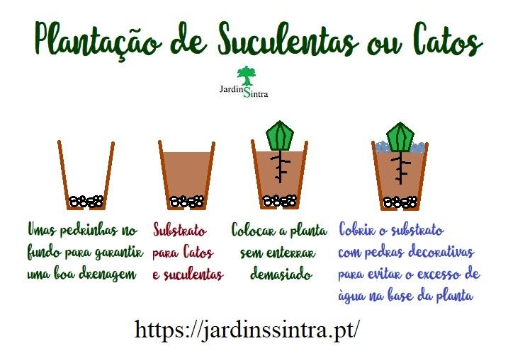 Uso de pedras na plantação de Catos e Suculentas