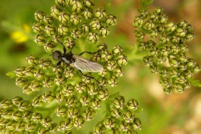 insecte ailé sur fleurs