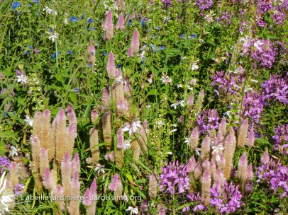 20120809 - Cher - Bourges - tapis floral 3
