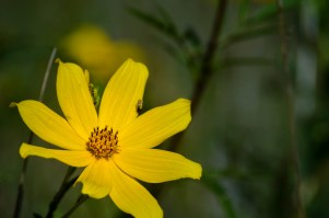 flower-1-2