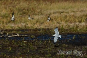 gull-at-willow-river