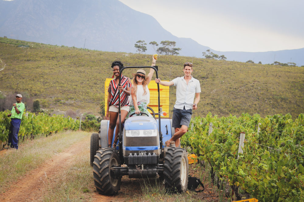 Meet 3 of the Hemel En Aarde's Divine Wine Farms