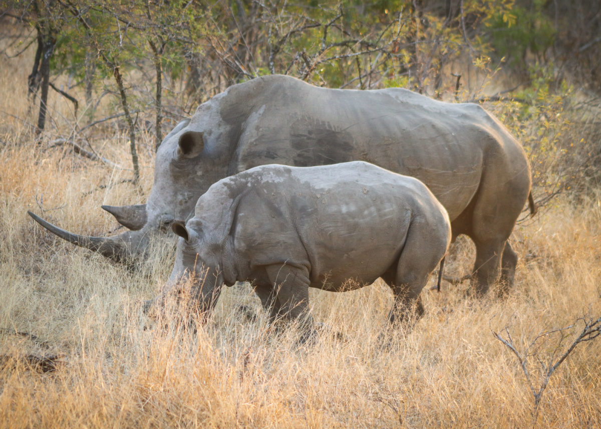 Wilderness in Waiting: Safari by the Book with 8 Important African Reads