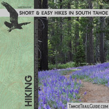 Hiking trail in the forest surrounded by blooming Lupine
