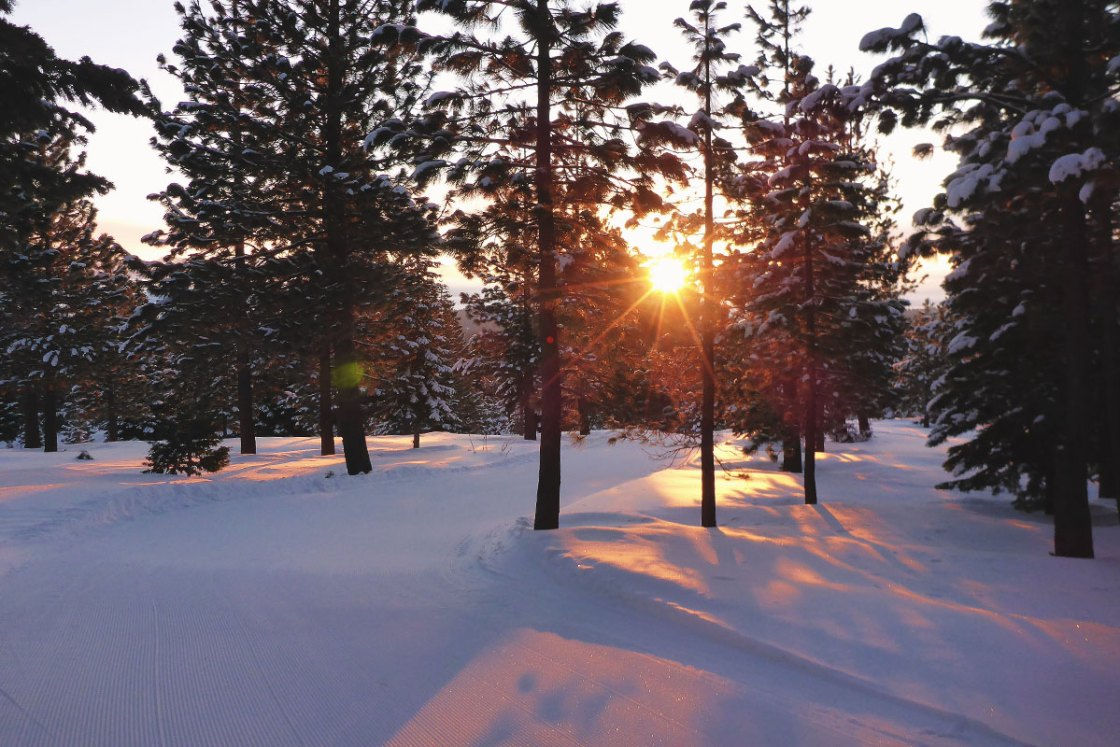 Sunrise filtering through the forest while cross-country skiing