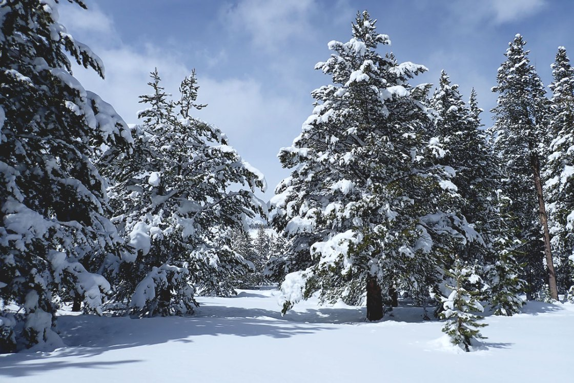 Winter paradise with snow-flocked trees and blue skies