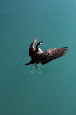 Taking Flight