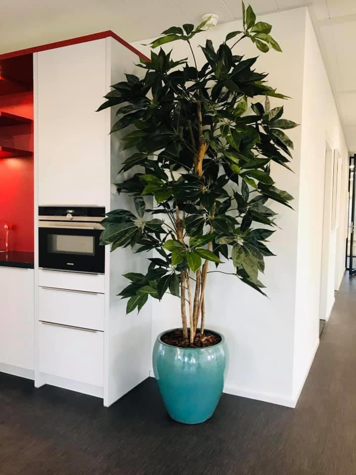 Jasmijnbloembinders - Zijden schafflera plant