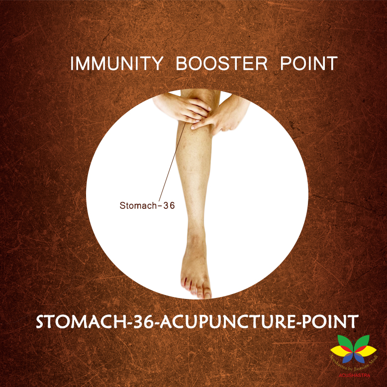 Stomach -36 Acupuncture Point