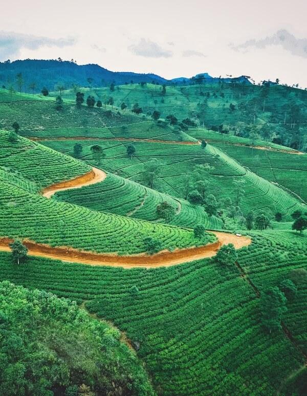 Hatton Tea Plantations