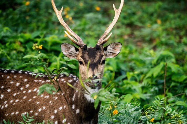The heart of the Deccan Kabini National Park