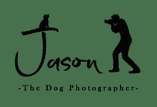 Jason the dog photographer county durham