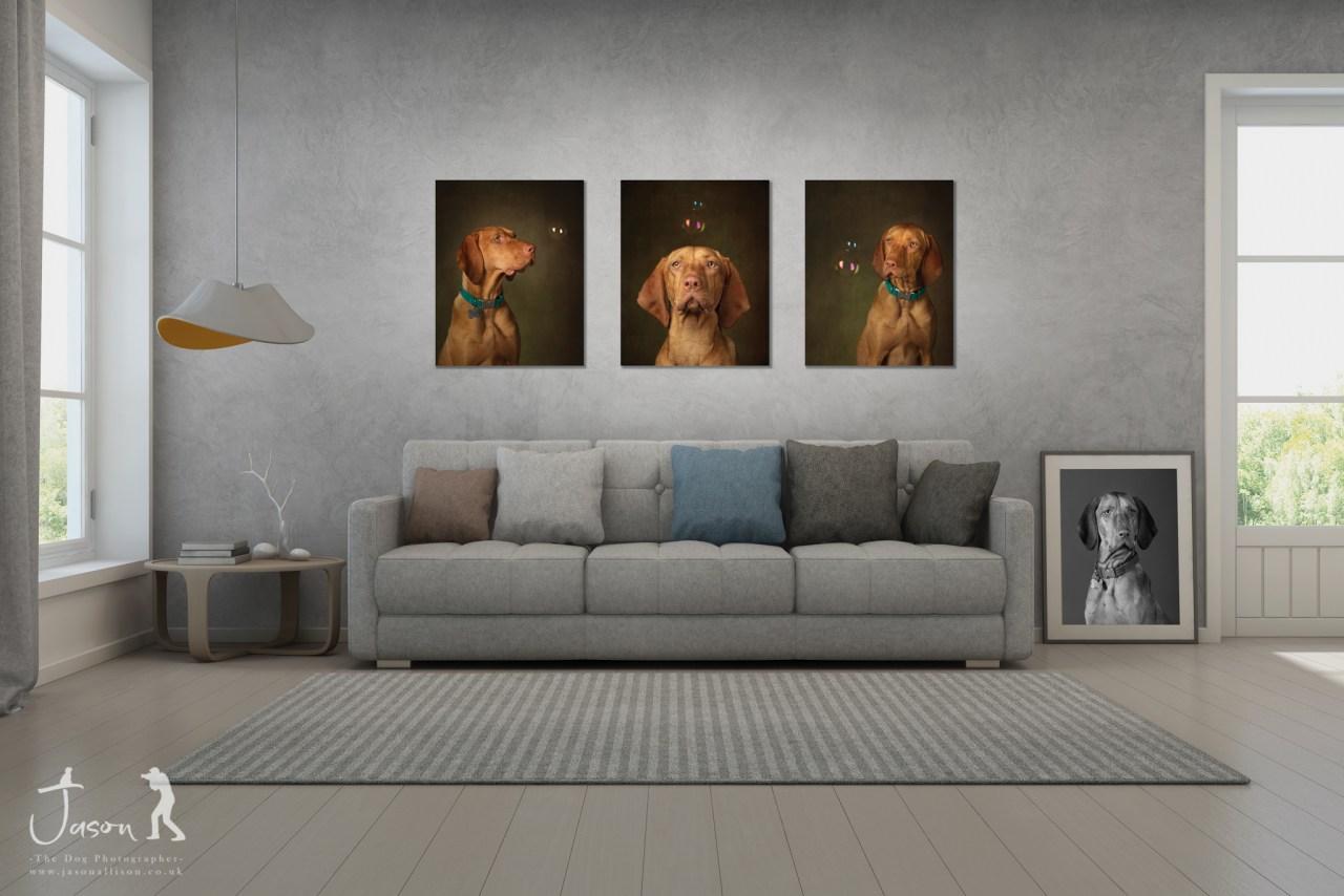 Hungarian Vizsla portrait experience by Jason Allison Dog Photography wall portrait cluster