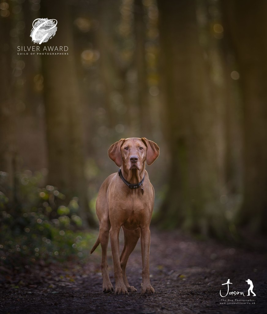 Outdoor Holly at Penshaw woods. A portrait by Jason Allison Dog Photography