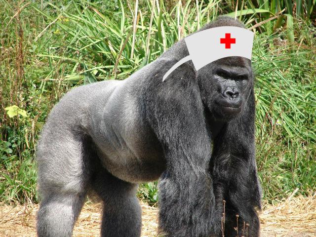 Jock_the_Gorilla_(2)