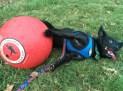 Zipper kickball