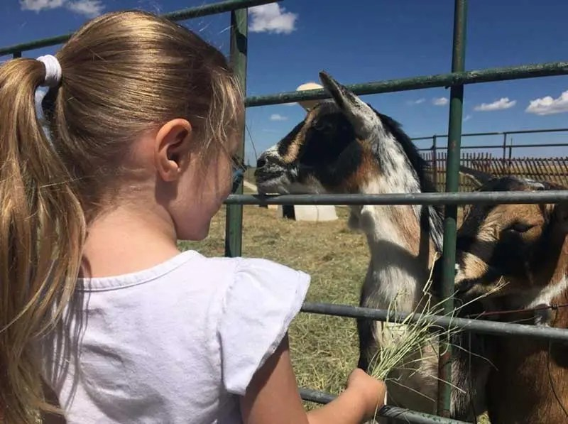 home-on-the-range-girl-feeding-goat
