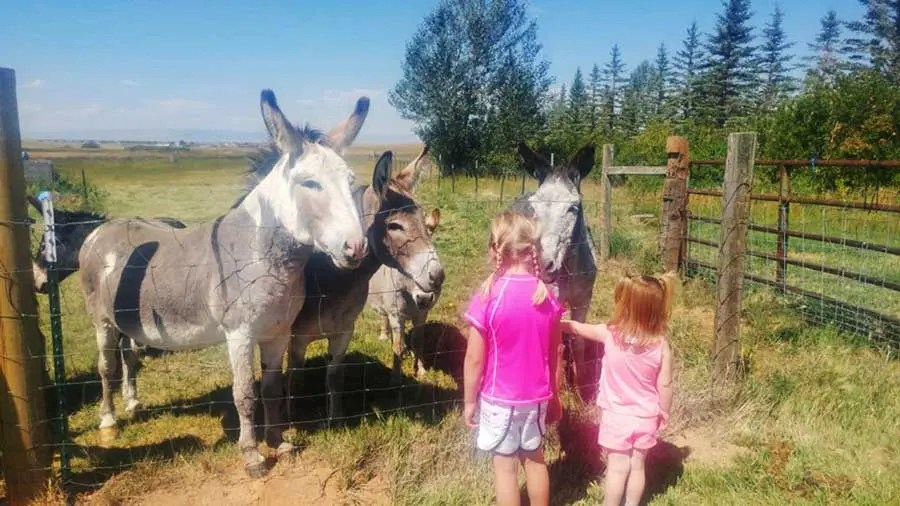 our-story-girls-with-donkeys