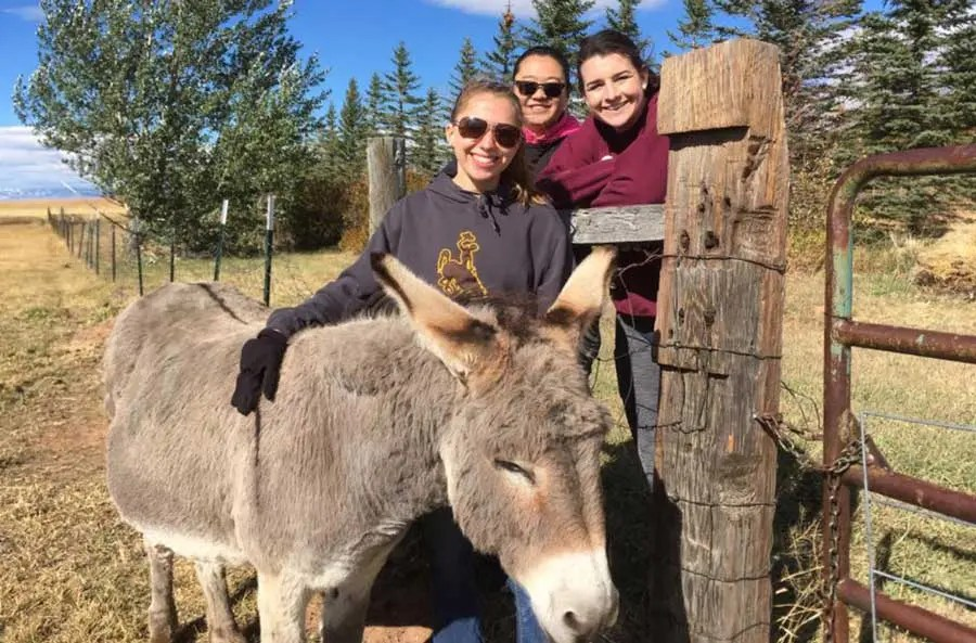 our-story-women-with-donkey