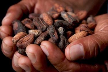 TSDS108318-cocoa