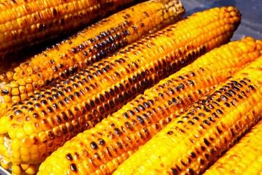 corn-9203