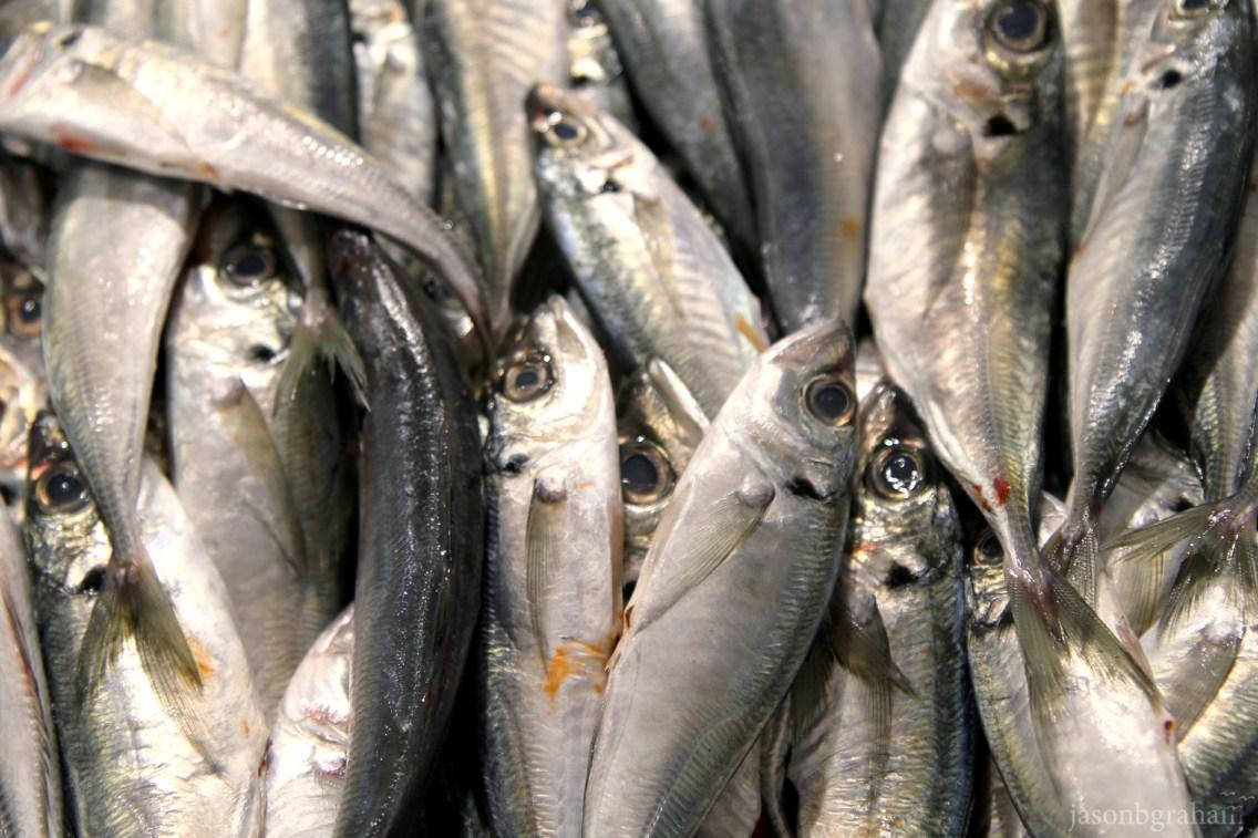 fish-3640