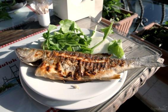 fish-4589