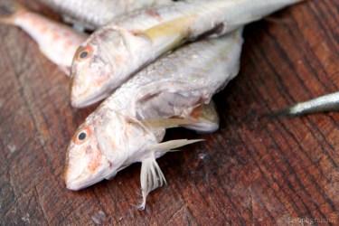 fish-5315