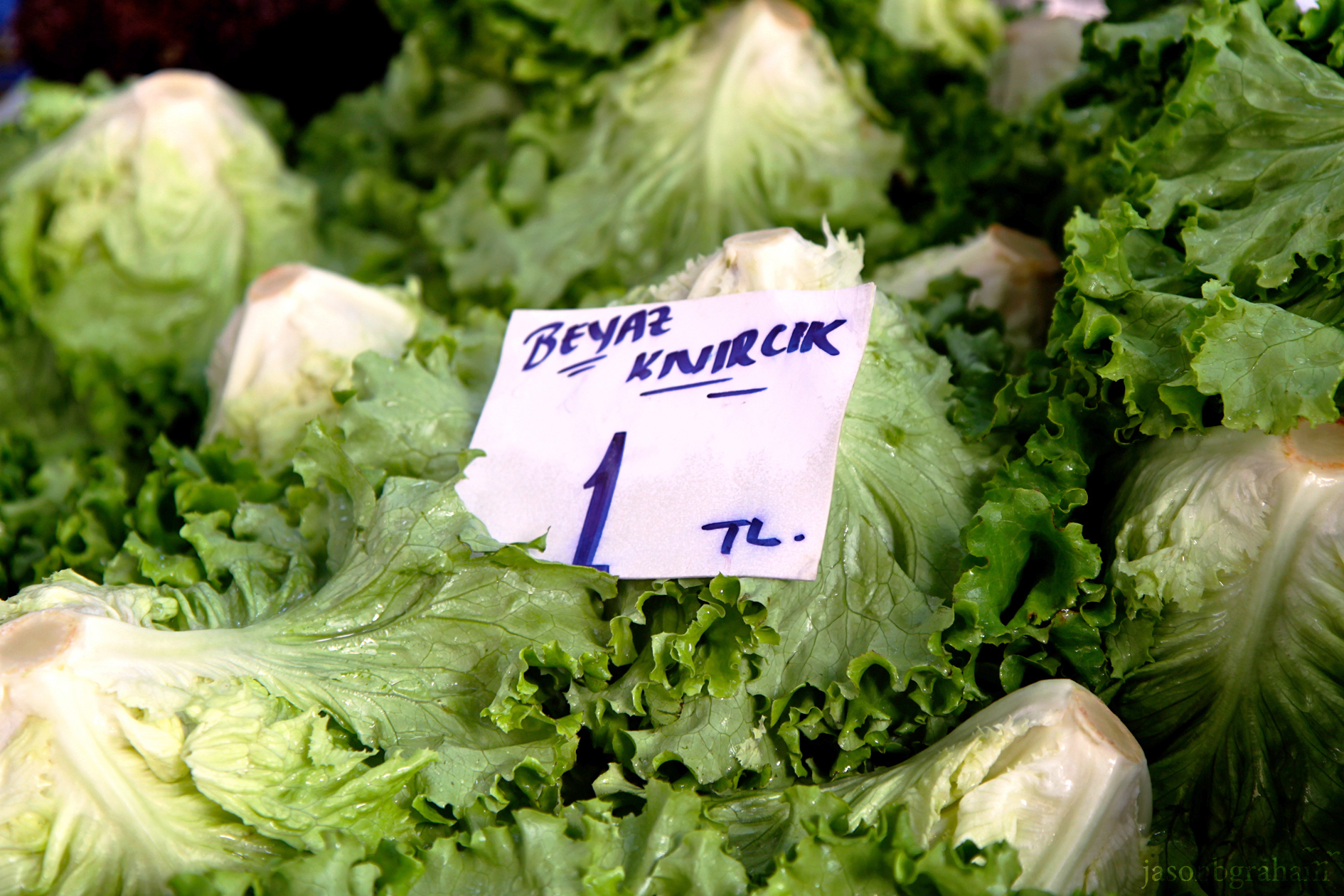 lettuce-9603