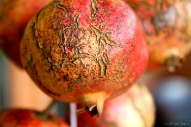 pomegranate-5838