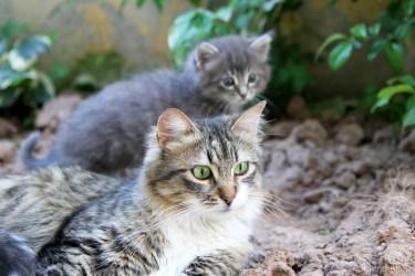 street-cat-4387