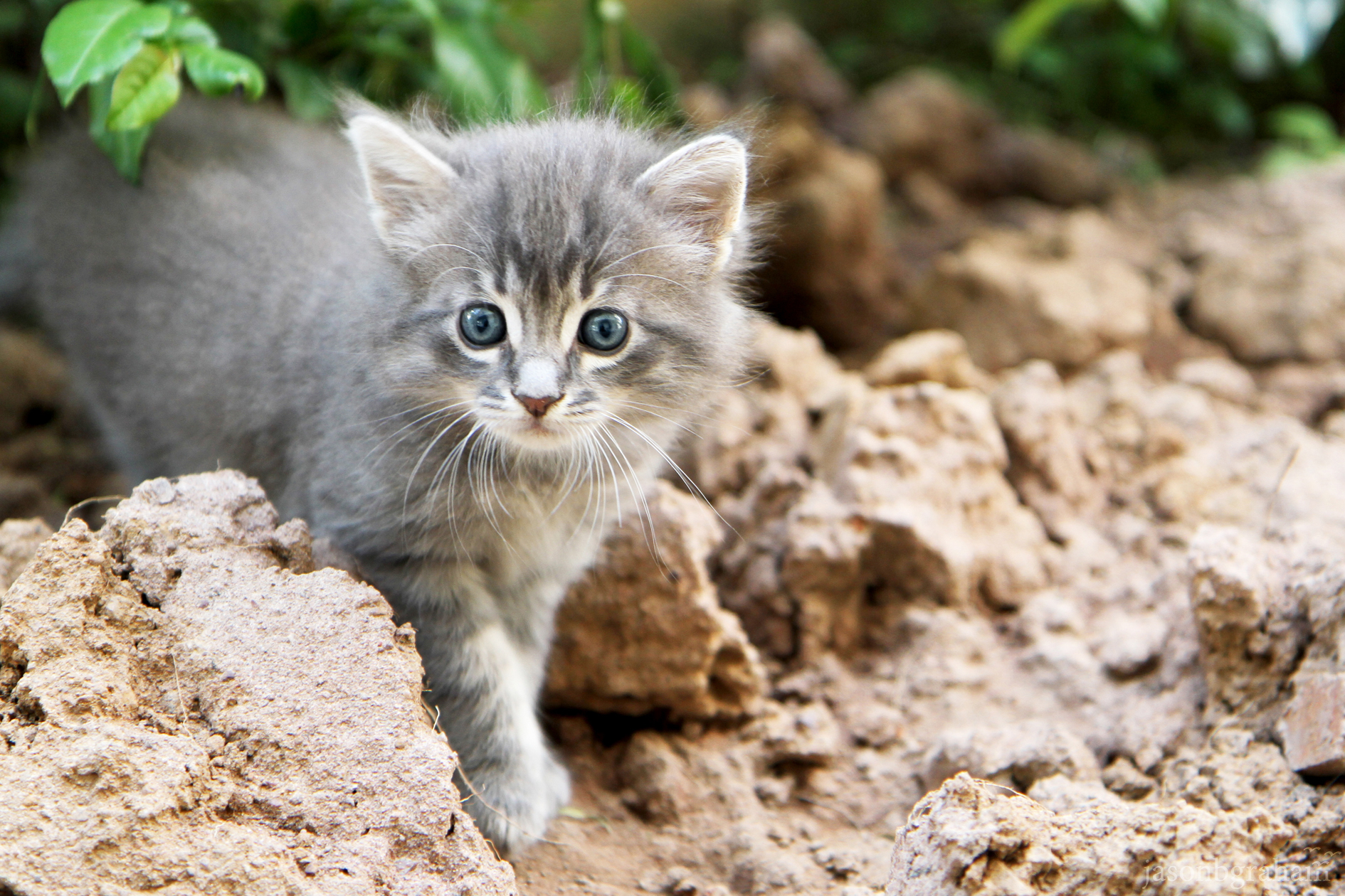 street-cat-4391
