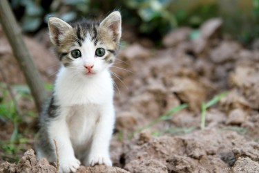 street-cat-4395