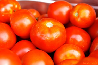tomatoes-5708