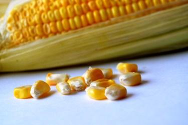 jason-b-graham-corn-misir-0003
