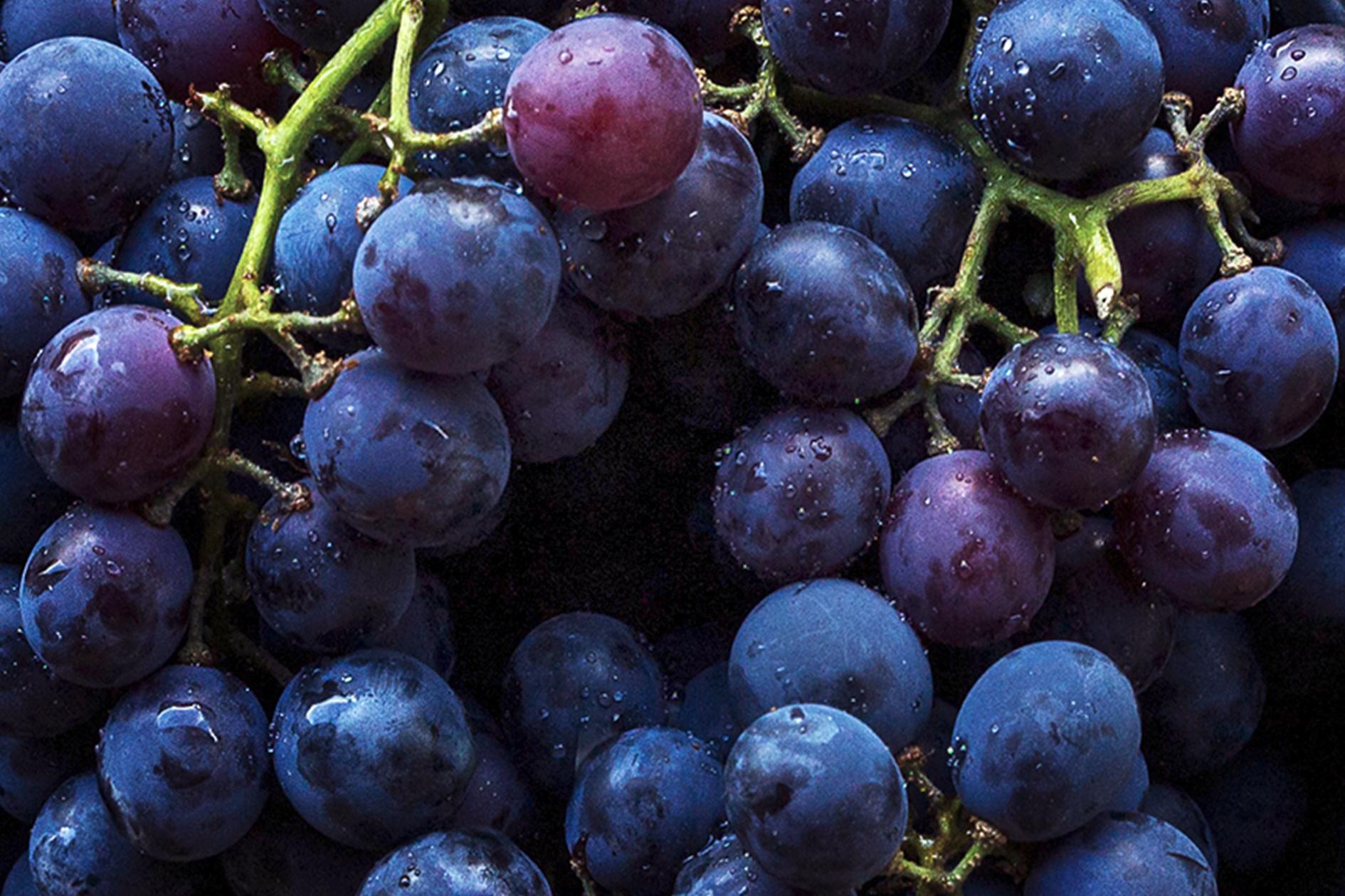 jason-b-graham-grapes-uzum-0019