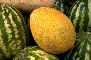 jason-b-graham-melon-kavun-0005