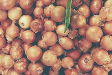 jason-b-graham-onions-sogan-0004